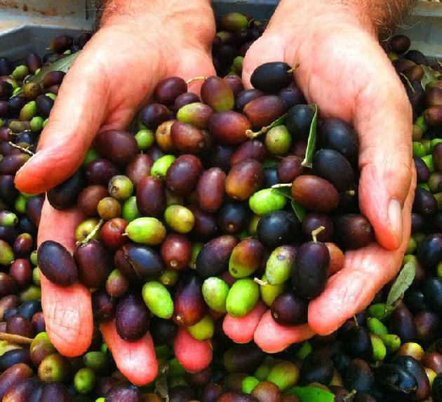 L&P Global: Your Next Industrial Olive Oil Supplier